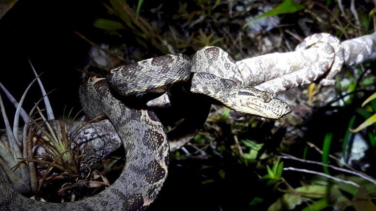 La réserve du Cuyabeno en Amazonie (03-06/06)